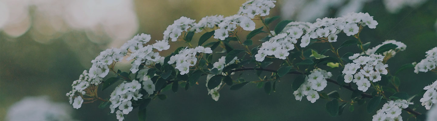 CEE Blog Header - Flower